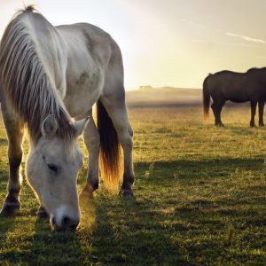 The Yin and Yang of Human and Animal Energy Systems
